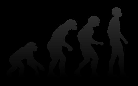 800px-Human_evolution.svg